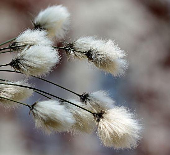 calidad del algodón para el papel de acuarela
